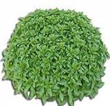 Sementi orticole di qualità l'ortolano in busta termosaldata (160 varietà) (BASILICO GRECO A PALLA)