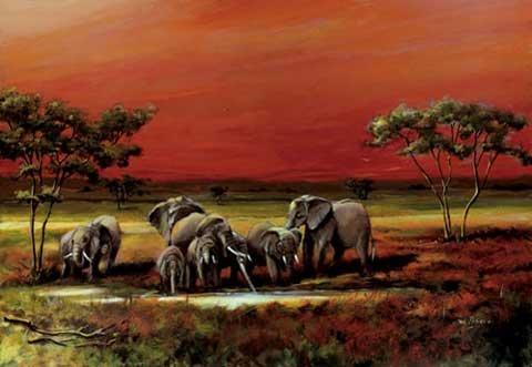 Empire 266378 - Póster de Elefantes (Aprox. 91,5 x 61 cm)