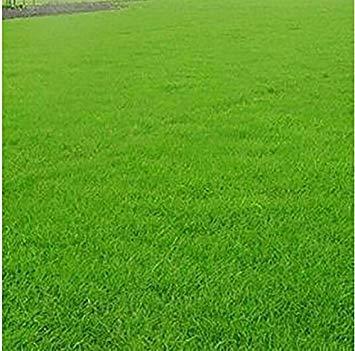 Vistaric Nuovo 2016 Green Source Turfgrass erba Semi Evergreen Semi di Prato 1000 semi/confezione Imballaggio professionale Spedizione gratuita 100% Vero