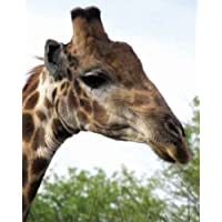 Giraffe Portrait IV by Underdahl disponibile, Dana – Stampa