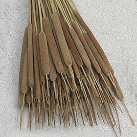 Preisvergleich Produktbild DN-Dekor 092-0014-025 - Schilfkolben hell,  10 Stck