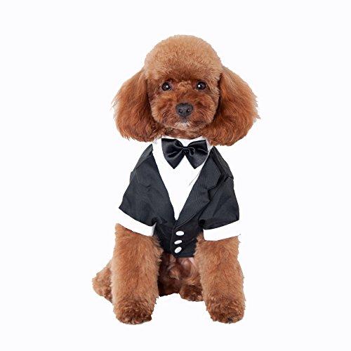 tier Chihuahua Schosshund Welpe Hündchen Bekleidung Warme Kleider Hundemantel Hundejacke Hundeanzug(NO.12, M) (Shar Pei Halloween Kostüme)