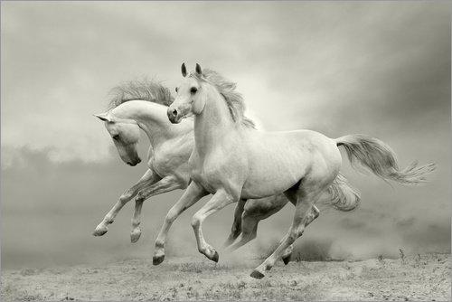 Poster 60 x 40 cm: Pferde im Sommer von Editors Choice - hochwertiger Kunstdruck, neues Kunstposter Sommer-editor