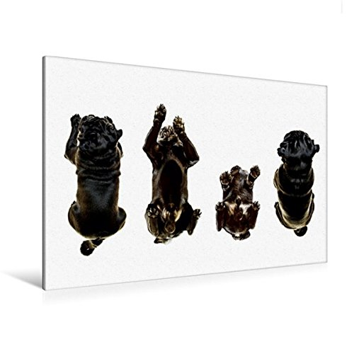 Calvendo Premium Textil-Leinwand 120 cm x 80 cm quer, Sitz! Platz! | Wandbild, Bild auf Keilrahmen, Fertigbild auf echter Leinwand, Leinwanddruck Tiere Tiere Premium-foto-studio