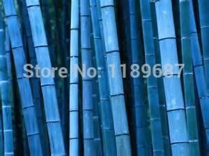 20 pcs / sac rares graines de bambou bleu, jardin décoratif, plante planteur bambu graines d'arbres pour le jardin de la maison diy