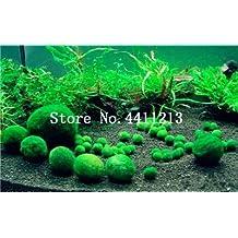 Hot Pellia For Live Fish Musgo Helecho Planta de Acuario Java Fish