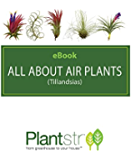 All About Air Plants (English Edition)