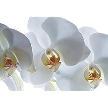 AG FTxxl 0190 diseño papel pintado para pared-partes fotomurales orquídea