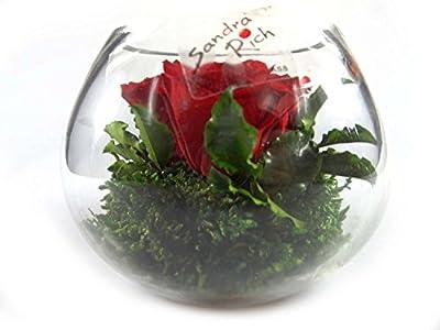 1 Blumengesteck aus echte konservierte Blumen mindestens 3 Jahre haltbar mit 3 rote Rosen und etwas Bindegrün - Abmessungen: Höhe ca. 10 cm - Durchmesser 10 cm
