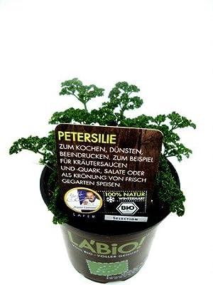 Bio Petersilie kraus Kräuterpflanze von LÀBiO! Kräuter - Du und dein Garten