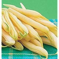 Virtue 200 Organic Bean, Kentucky Wonder Wax Pole Bean Seeds, Heirloom !