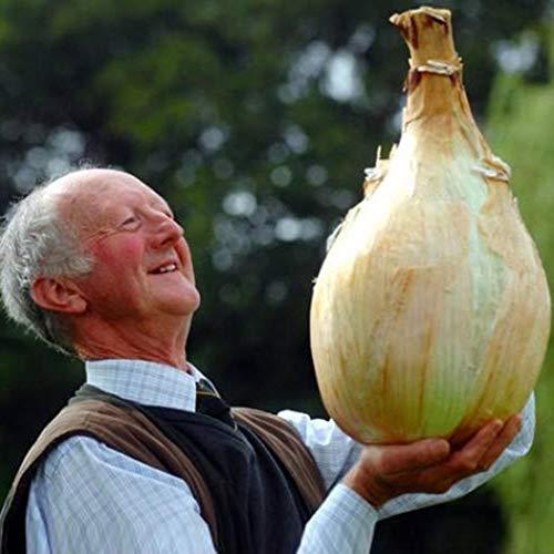 """Ultrey Samenshop - Riesen Zwiebel Samen""""größte Zwiebel der Welt"""" Bio Gemüsezwiebel Samen Küchenzwiebel"""