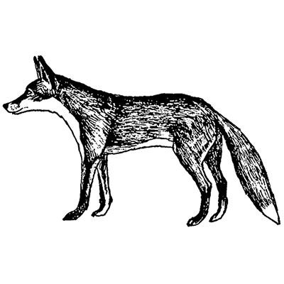 25-cm-red-fox-timbri-in-gomma-5221