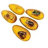Vosarea Ámbar fósil con Insectos muestras Piedras muestras de Cristal colección de decoración para el hogar Colgante Ovalado