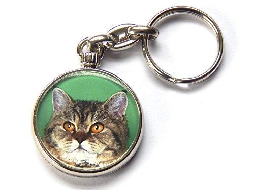 Moody Motorz Selkirk Rex Schildpatt Tabby Katze Kätzchen Hochwertig Chrom Schlüsselring Bild Beide Seiten