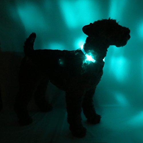 LED Leuchthalsband LEUCHTIE Plus Easy Charge türkis Größe 50 aufladbar - 2