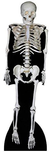 steller von Skelett ()
