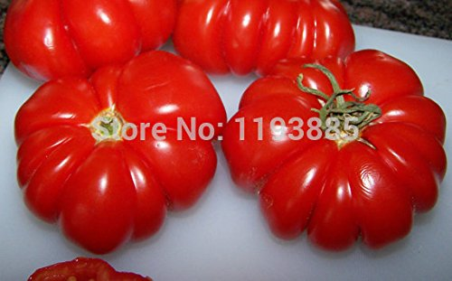 Tomate Costoluto Genovese