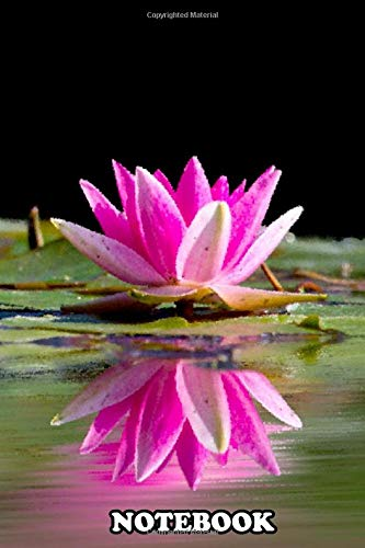 Notebook: Nelumbo Nucifera Also Known As Indian Lotus Sacred Lo , Journal for Writing, College Ruled Size 6