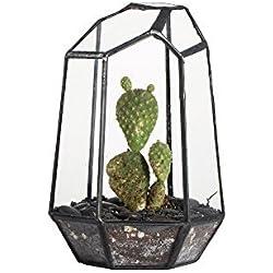 JINCAO Terrarium aus unregelmäßig geformtem Glas, geometrisch, Höhe 16cm 19cm 25cm, für Sukkulenten, als Übertopf, Blumentopf, für Farne/Moose, durchsichtig, 16 cm