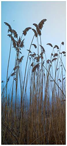 Wallario Selbstklebende Türtapete Schilfrohr am See vor blauem Himmel - 100 x 220 cm in Premium-Qualität: Abwischbar, Brillante Farben, rückstandsfrei zu entfernen