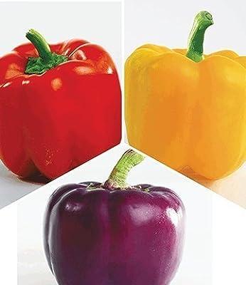 BALDUR-Garten Paprika-Kollektion 3 Pflanzen Paprikapflanzen im Mix von Baldur-Garten auf Du und dein Garten