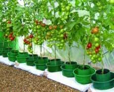 Garden Innovations 3 vasi per la coltivazione di pomodori