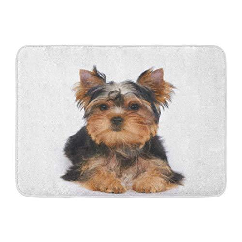LIS HOME Fußmatten Badteppiche Outdoor/Indoor Fußmatte Hund EIN Welpe des Yorkshire Terrier liegt auf Weiß Kleine Yorkie Entzückende Badezimmer Dekor Teppich Badematte (Yorkshire Welpen)
