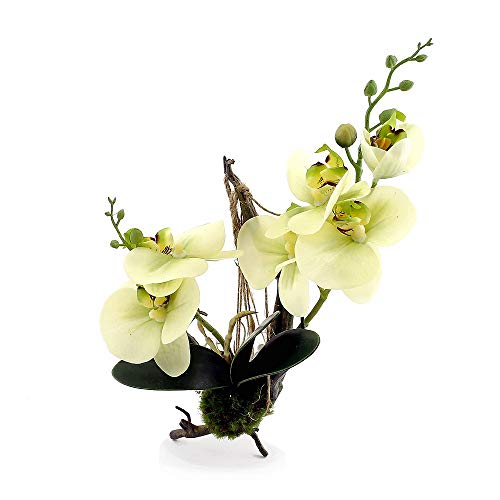 Tillandsien-Arrangement Pflanzen Tillandsien