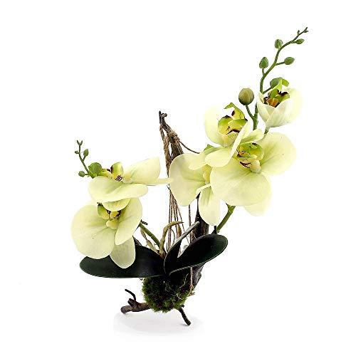 Tillandsien-Arrangement Mini Aloe