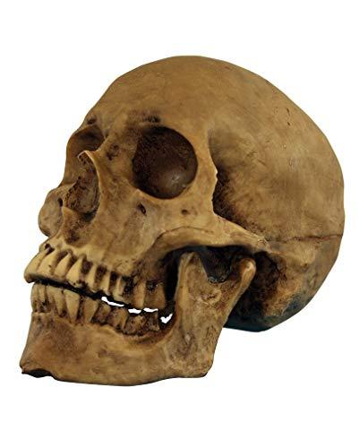 Horror-Shop Antik aussehender Totenschädel