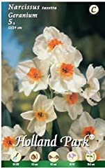 Idea Regalo - Holland Park bulbi da fiore di molte varietà e colori in sacchetto blister con foto (NARCISI GERANIUM 5 bulbi)