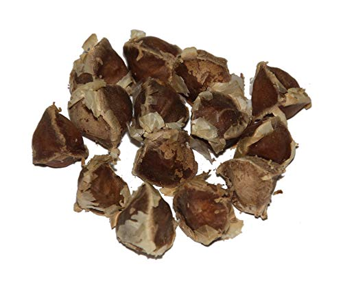 Moringa -Moringa oleifera- 100 Samen *Auch Meerrettichbaum genannt*