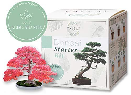 valeaf Bonsai Starter Kit - SUMM...