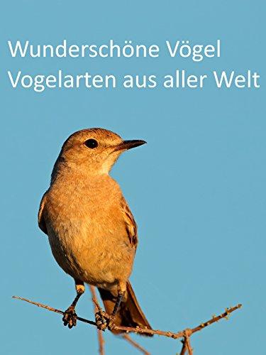 wunderschoene-voegel-vogelarten-aus-aller-welt