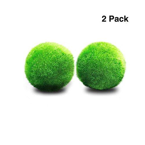 2 Marimo Moss Balls Einzigartige Living Grüne Kugelförmige Pflanzen Schaffen Legendäre üppige Landschaft im Aquarium Natürliche Lebensraum für Tropische Fische Dekoration für die Gedeihen mooskugeln