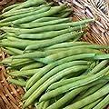 100 Provider Buschbohnensamen Stringless neues Saatgut für 2017 Non-GMO Erbstück von SVI auf Du und dein Garten
