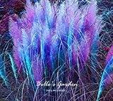 SwansGreen 4: 100 Stück Multi-Farben Bulrush Samen Hardy Pflanzen Gras Samen Exotische Ziergräser Bonsai Samen 04