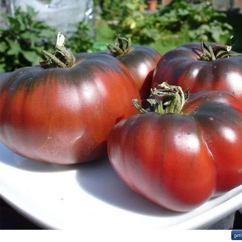 Tomate Black Krim/Noire de Crimee 20 x Samen aus Portugal 100% natürlich Aufzucht/absolute Rarität/Massenträger ideal für Salat und Snacks