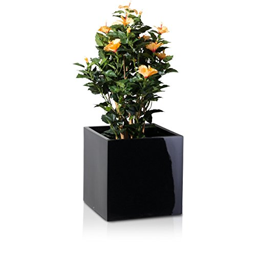 plant-pot-cubo-fibreglass-planter-flowerpot-colour-black-glossy-high-gloss-surface-weather-and-frost