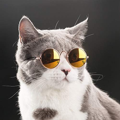 8Eninine Haustier Sonnenbrille Teddy Hund Katze Brille Haustier Zubehör Lustige Katze Brille gelbe Beschichtung