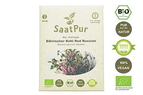 SaatPur Bio Keimsprossen - Sibirischer Kohl Red Russian - Keimsaat für die Sprossenzucht zuhause - 20g Rotkohl alte Sorte