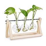JUSTDOLIFE Plant Terrarium Moderno Creativo Vaso di Vetro con Supporto in Legno per Casa