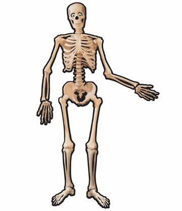 Kostüm Cut Skelett Out - PARTY DISCOUNT Cut-Out Skelett aus Pappe, 140 cm