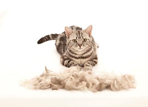 FURminator Fellpflege deShedding-Pflegewerkzeug für kurzhaarige kleine Katzen bis 4,5 kg, Größe S, 1 Tool - 5