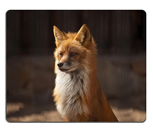 Luxlady Gaming Mousepad foto ID: 20338093 fox seduto su summer sun