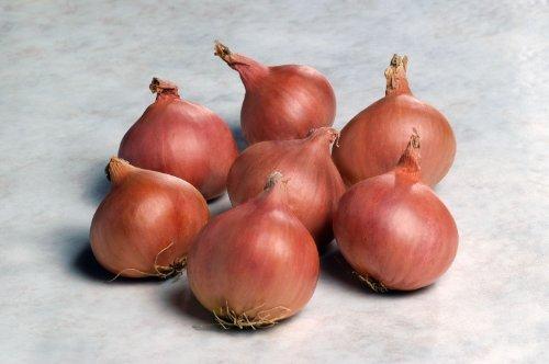 just-seed-saatgut-schalotte-edelzwiebel-sorte-matador-f1-100-samen