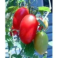 PLAT FIRM Germination Les graines PLATFIRM-10 graines de raisin rouge tomate Gigantesque! Rare!