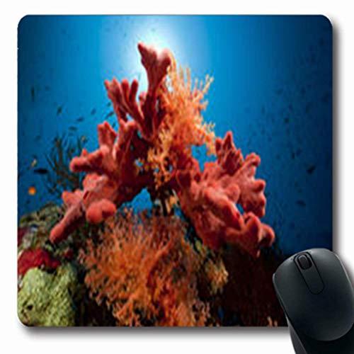 Luancrop Mousepads Wasserfisch-Korallen-exotischer Ozean-Tier-Natur-Salz-längliches Spiel Mousepad rutschfeste Gummimatte -