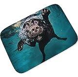 Knbob Wc Teppich Einzeln Tierhund Hund 04 Badezimmermatte Quadratisch 40X60Cm